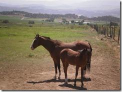 silt horses